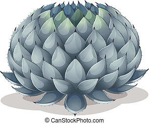 Agave parryi - Illustration of an Agave parryi on a white...