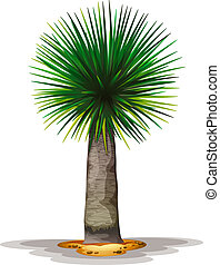 Dracaena draco - Illustration of the Dracaena draco on a...