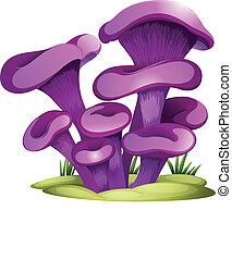 roxo, fungos