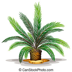 Cycas revolute - Illustration of the cycas revolute on a...