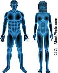 Male and female human body - Illustration of the male and...