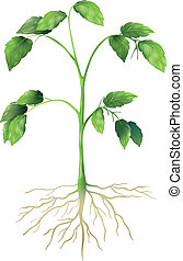 Green Plant - Illustration showing a green plant