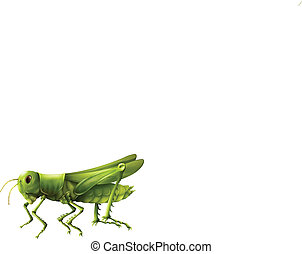 Grasshopper - Illustration showing a grasshopper