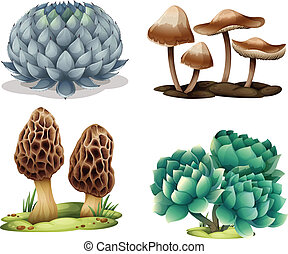 Cactus and mushrooms - Illustration of cactus and mushrooms...