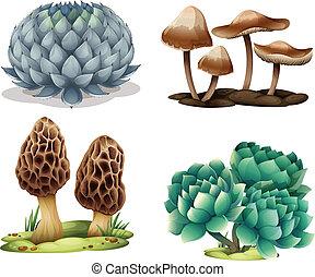 cacto, cogumelos