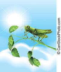 Grasshopper - Illustration showing the grasshopper