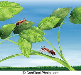 Ants - Illustration showing the ants
