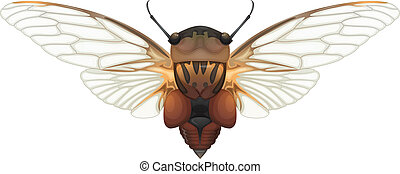 Double drummer - Illustration of a Double Drummer cicada...