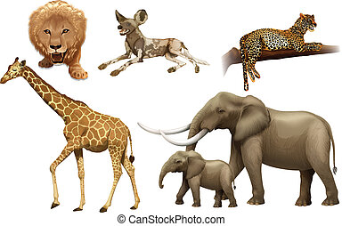African animals - Illustration of the African animals on a...