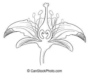 Tiger lily flower outline - Tiger lily flower black outline