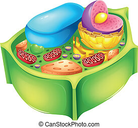 Plant cell - Illustration of a plant cell
