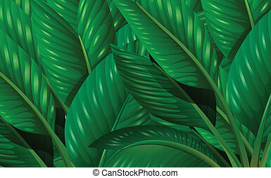 Leaves - Illustration of the leaves