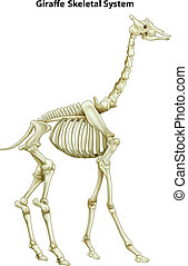 Skeletal system of a giraffe - Illustration of the skeletal...