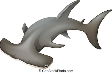 Hammerhead Shark - Illustration of the hammerhead shark