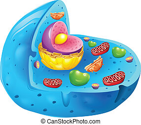 eukaryotic cell - Cross section of a eukaryotic cell