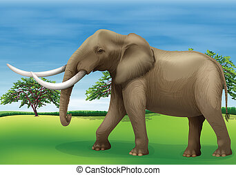 Elephant - Illustration of the elephant