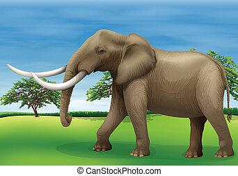 Elephant - Illustration of the elephant