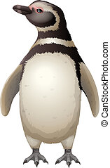 Magellanic Penguin - Illustration of the Magellanic Penguin
