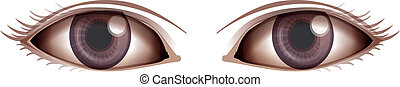 Human eye - Illustration showing the Human eye on a white...