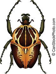 Goliathus regius - Goliath beetle - Illustration of a...