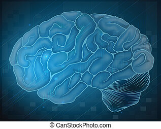 Brain - Illustration of a brain