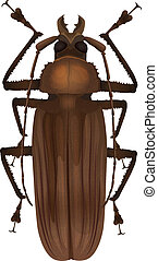 Titan beetle - Titanus giganteus - Illustration of a Titan...