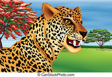 Cheetah - Illustration showing the cheetah