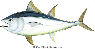 Atlantic bluefin tuna - Illustration of an Atlantic bluefin...