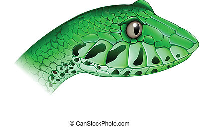 A scary snake - Illustration of a scary snake on a white...