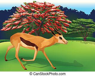 A deer - Illustration of a deer