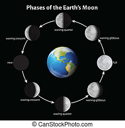 Phases of the Moon - Phases on the Moon as seen from Earth