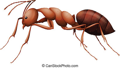 The Ant - Illustration showing the ant