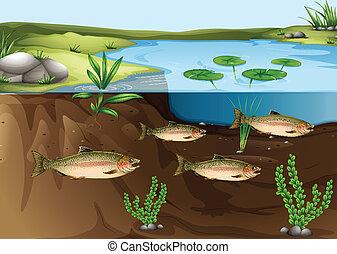 charca, debajo, ecosistema