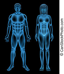 Human body - Illustration showing the human body