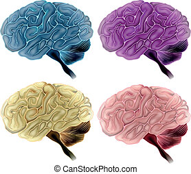 Human brain - Illustration showing human brains