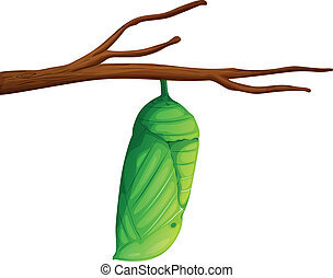 Pupa - Danaus plexippus - Illustration of a Danaus plexippus...