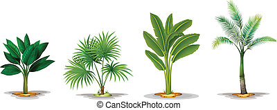 Different trees - Illustration of the different trees on a...