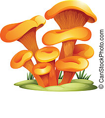 Omphalotus Olearius - Illustration of an omphalotus olearius...