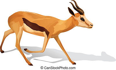 A deer - Illustration of a deer on a white background