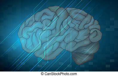 Human brain - Illustration of human brain with blue...