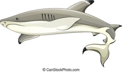 Blacktip shark - Illustration of a blacktip shark...