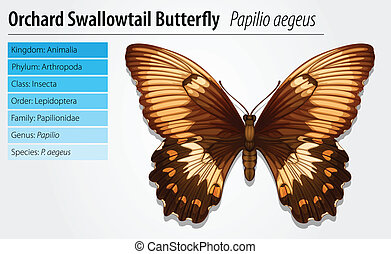 Swallowtail butterfly - Illustration of a swallowtail...