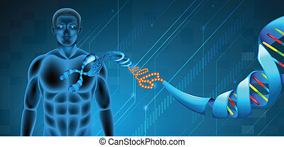 Deoxyribonucleic acid - Illustration of the Deoxyribonucleic...