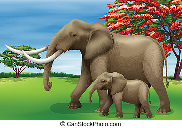 Elephant - Illustration showing the elephant