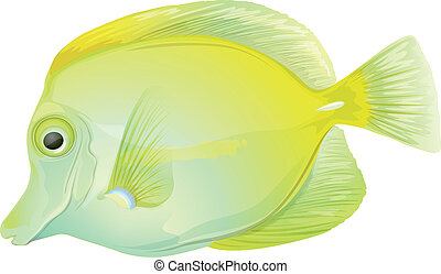 Yellow tang - Illustration of a yellow tang (Zebrasoma...