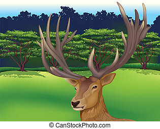 Deer - Illustration showing the male deer
