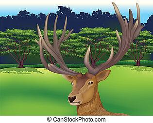 Deer - Illustration showing the male deer