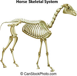 Horse Skeletal System - Illustration of the horse Skeletal...