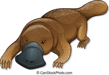 Platypus - Illustration of a platypus (Ornithorhynchus...