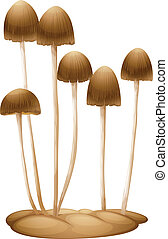 Psilocybe mexicana - Illustration of the Psilocybe mexicana...